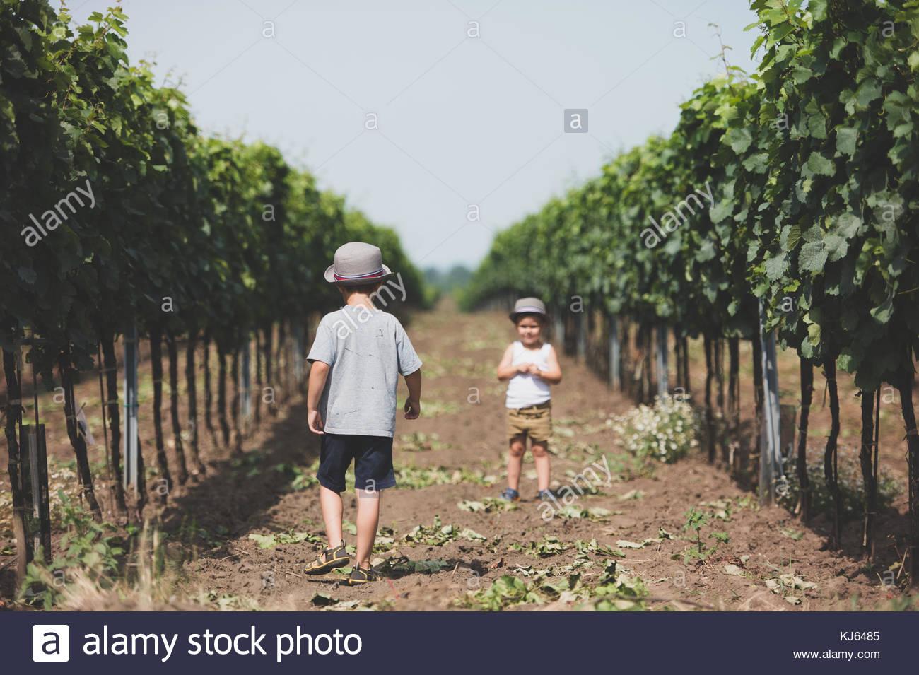 Kinder von Reben auf dem Land Stockbild
