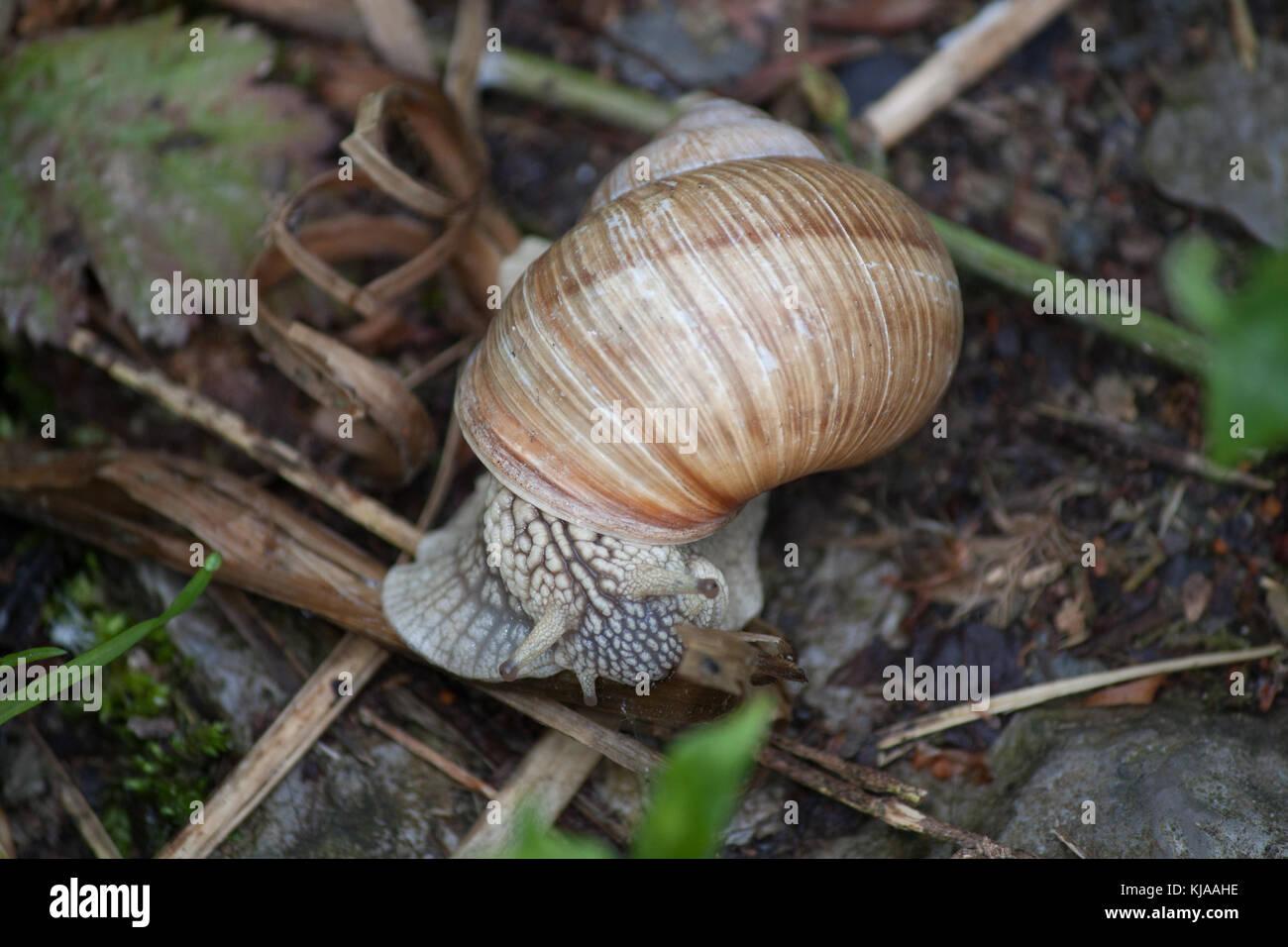 Cochlea Stockfoto, Bild: 166184970 - Alamy