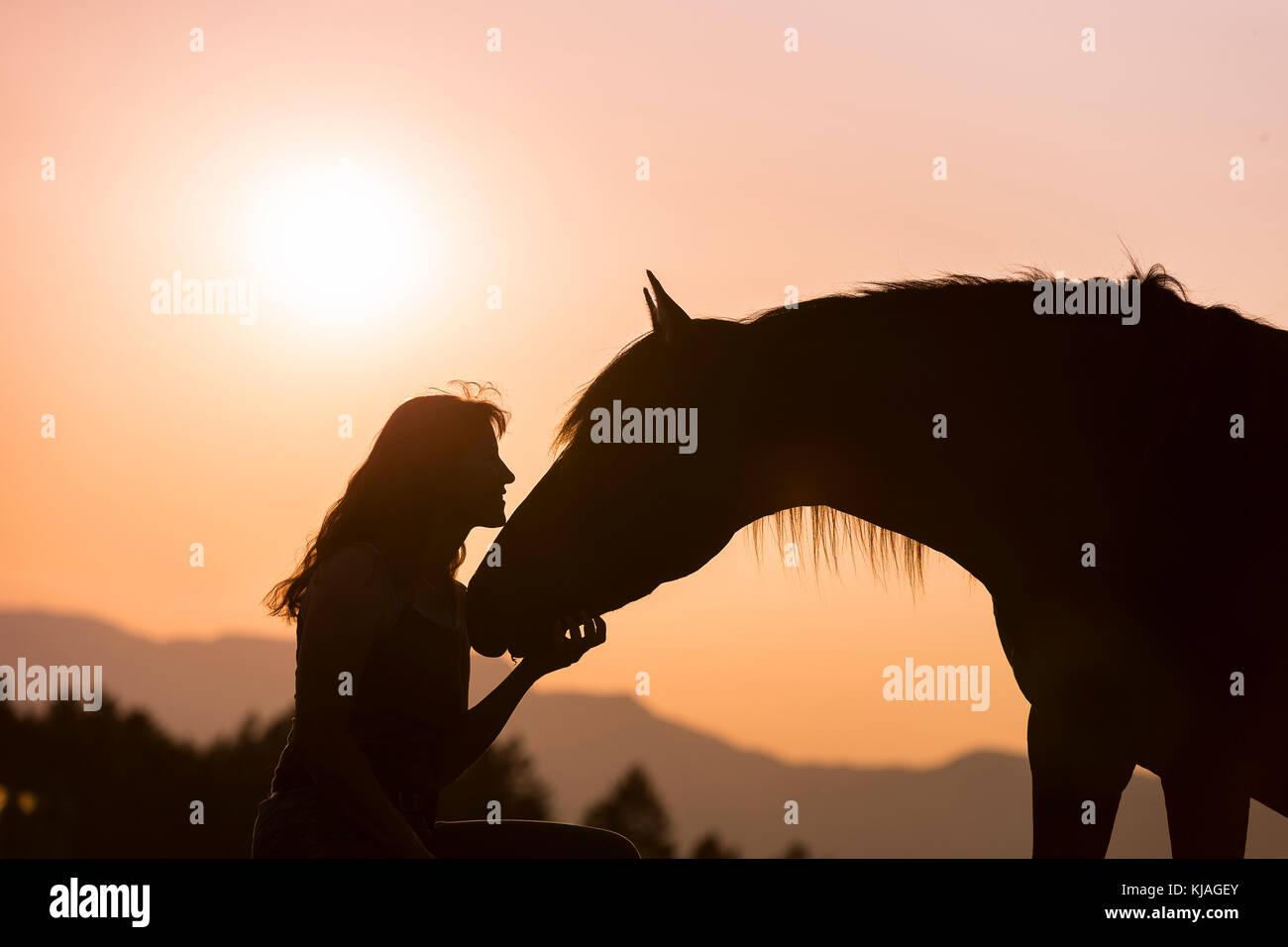 Spanische Pferd, Andalusische. Frau mit dun Hengst silhouetted gegen die untergehende Sonne. Schweiz Stockbild