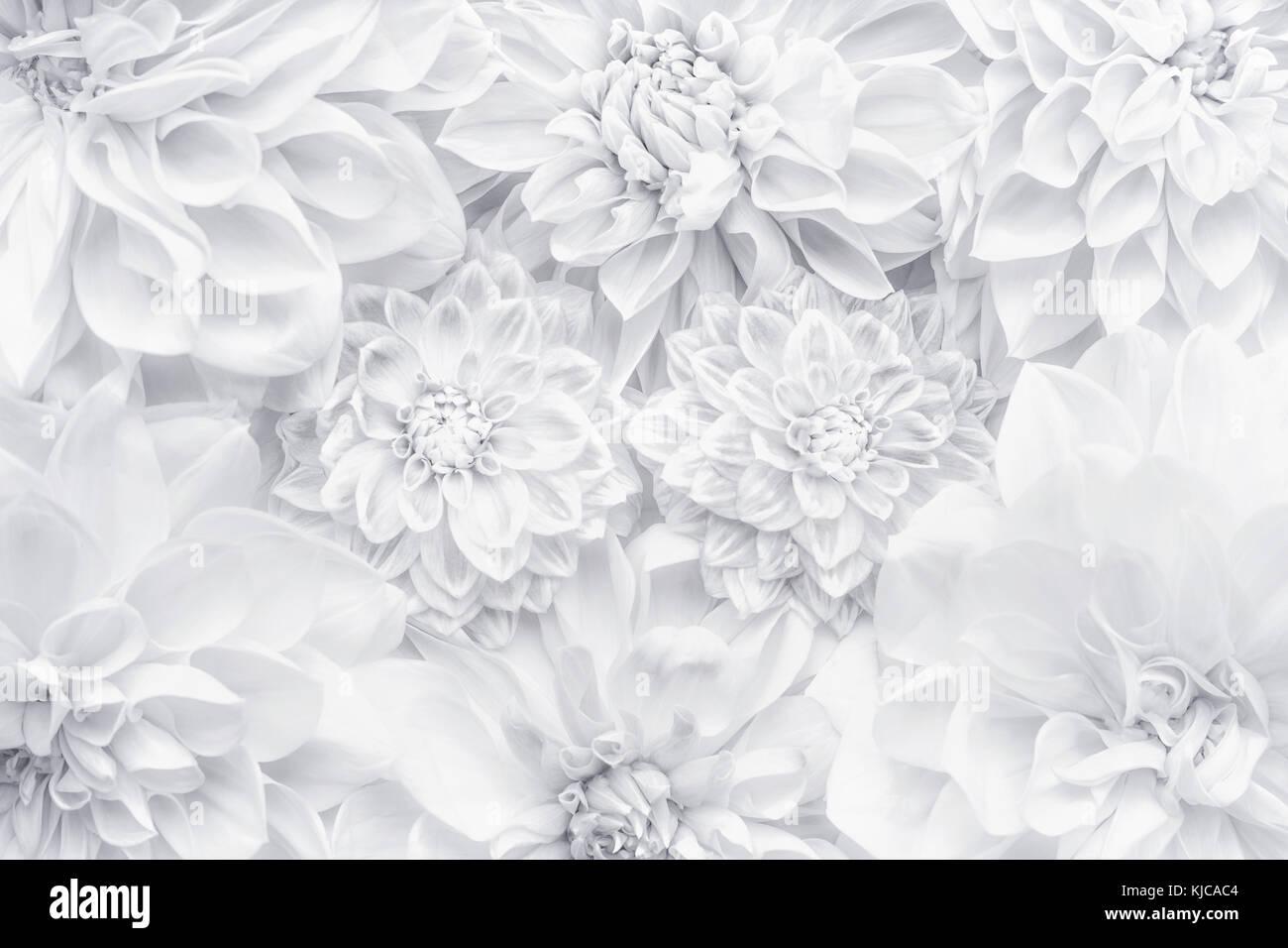 Kreative Weisse Blumen Layout Florales Muster Oder Hintergrundbild