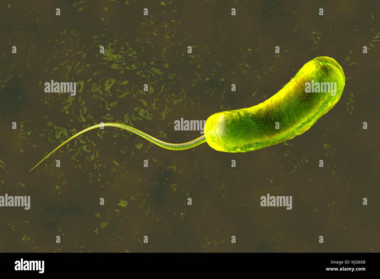 3D-Darstellung eines eine Konvergenz zu einem Bakterium Vibrio cholerae Cholera verursacht Stockbild
