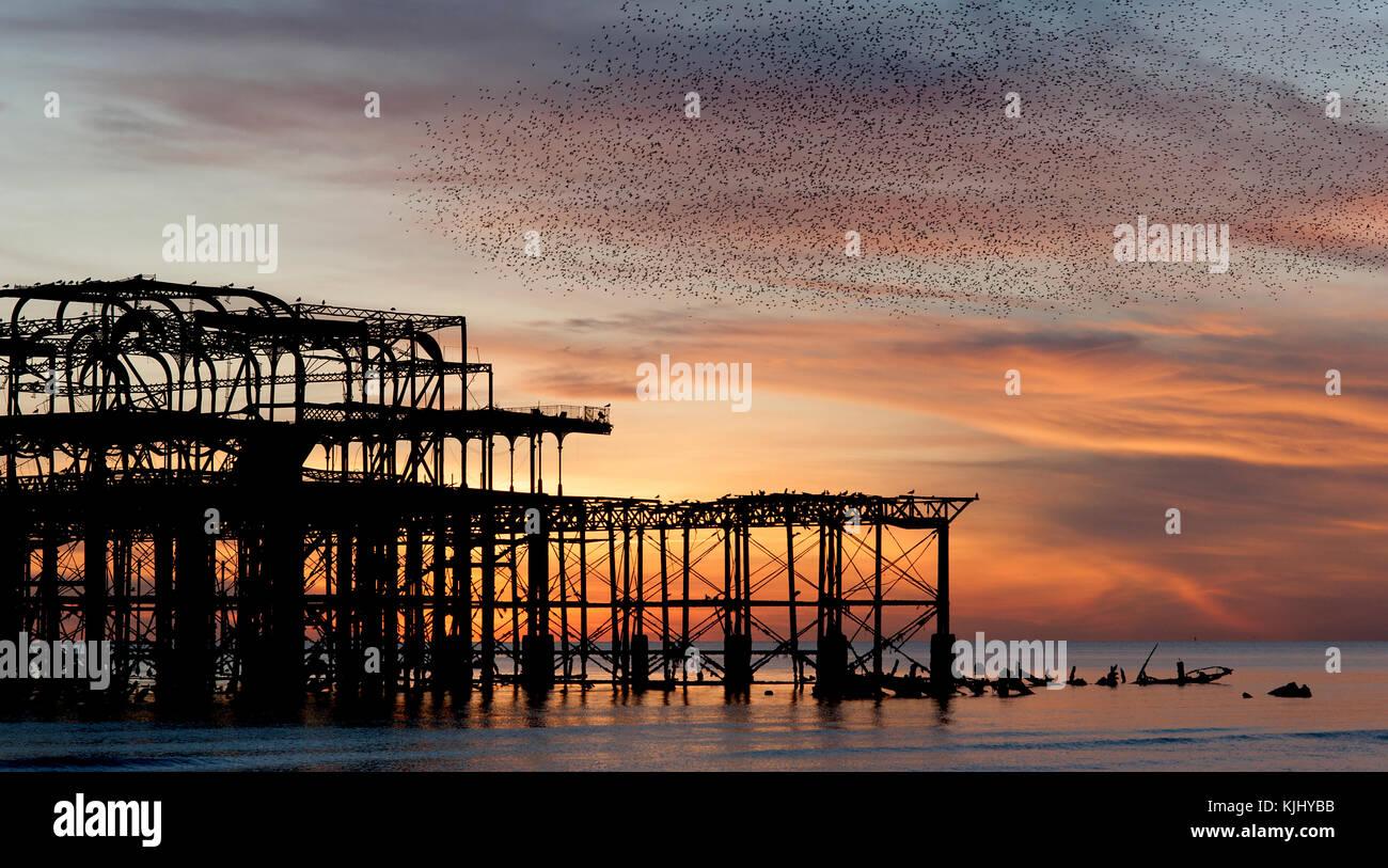 Murmuration über den Ruinen von Brightons West Pier an der Südküste von England. Eine Herde von Staren Stockbild