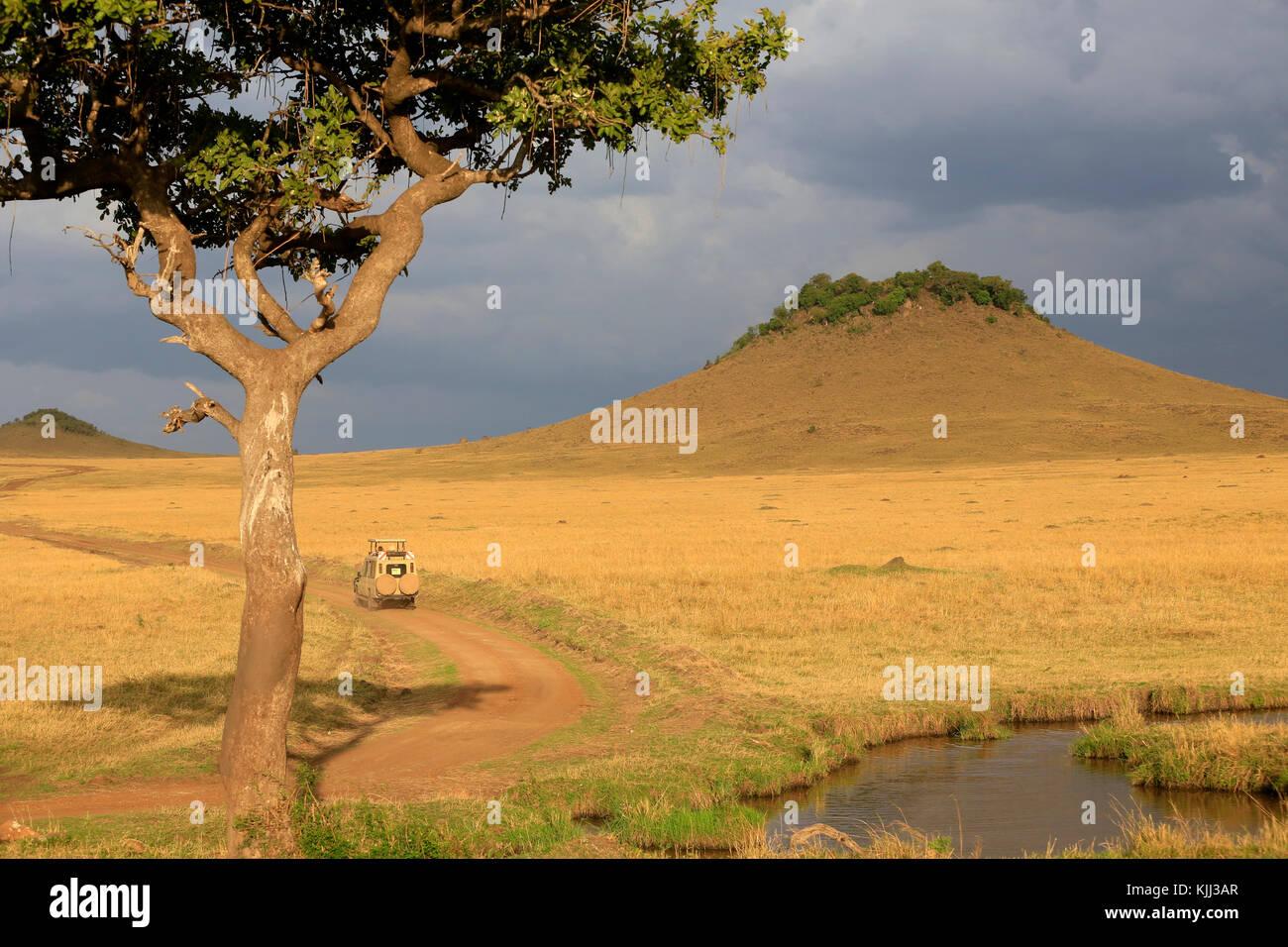 Einem Off-Road-Fahrzeug in der Afrikanischen Savanne. Masai Mara Game Reserve. Kenia. Stockbild
