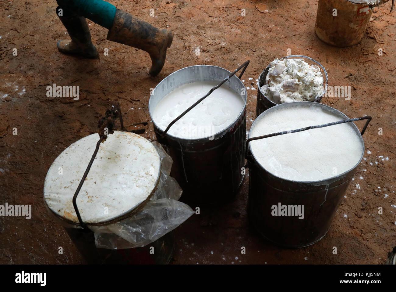 Gummibaum Latex und Gummi. Kon Tum. Vietnam. Stockbild