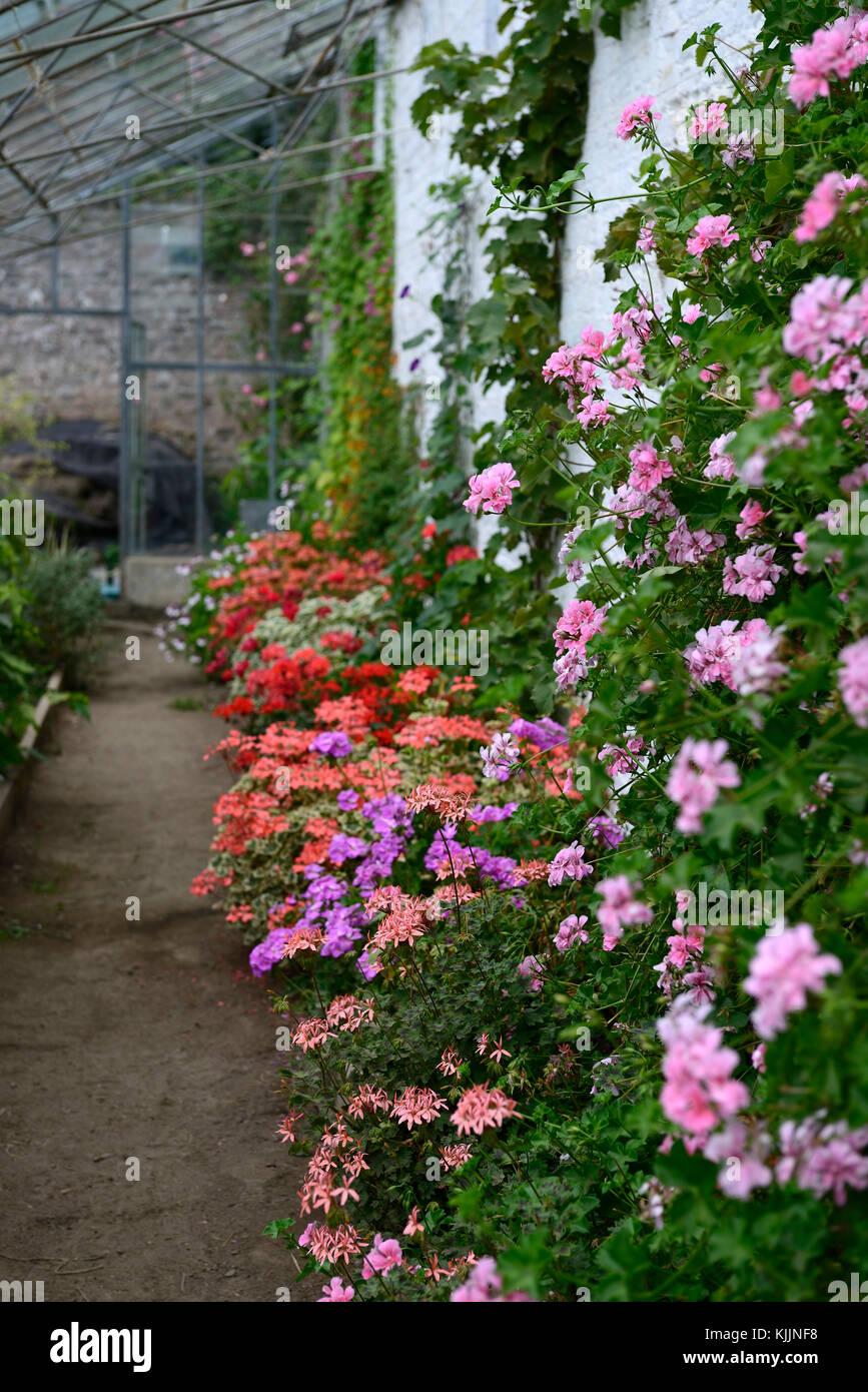 Favorit Blumen Fur Wintergarten De33 Casaramonaacademy