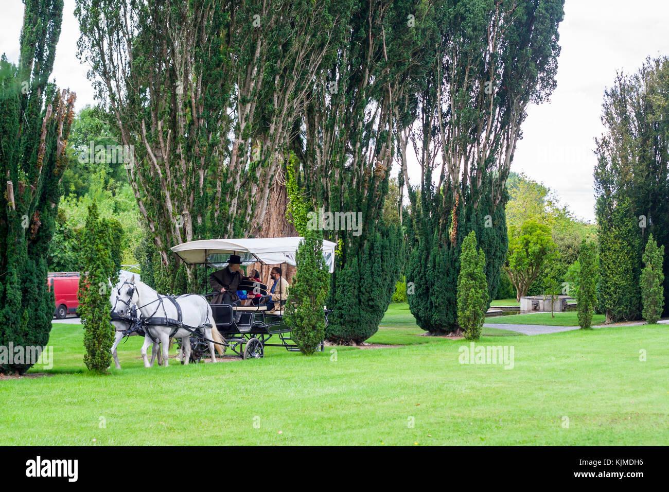 Zwei Weiße Pferde Tragen Scheuklappen Ziehen Einer Kutsche Mit Einem