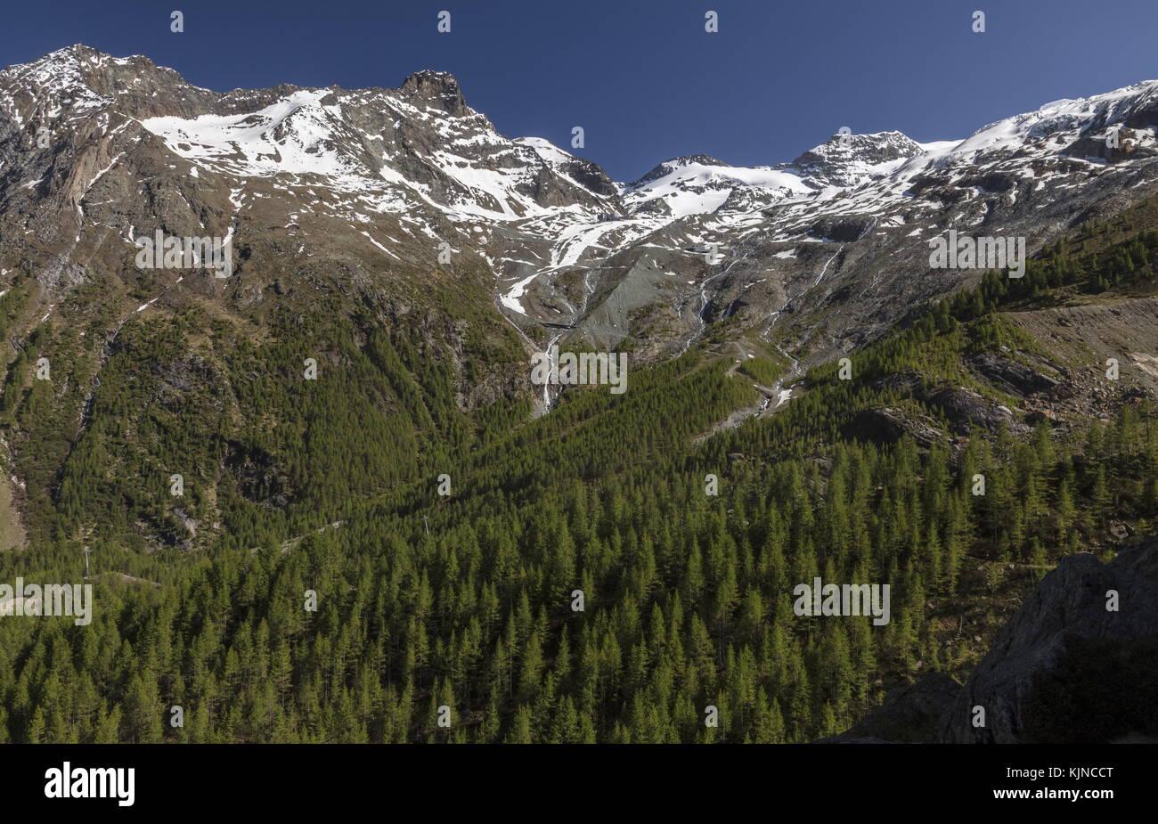 Lärche Wald an den Hängen des plattenhorn, oberhalb Saas Fee, schweizer Alpen. Stockbild