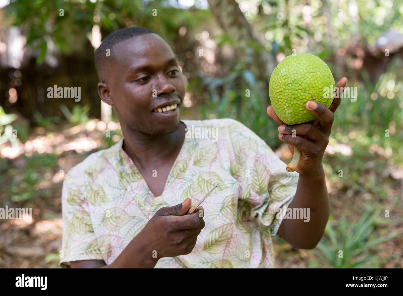 Sansibar, Tansania; ein Gewürz Landwirt hält eine seiner Brotfrucht an seinem Spice Farm wächst. Stockbild
