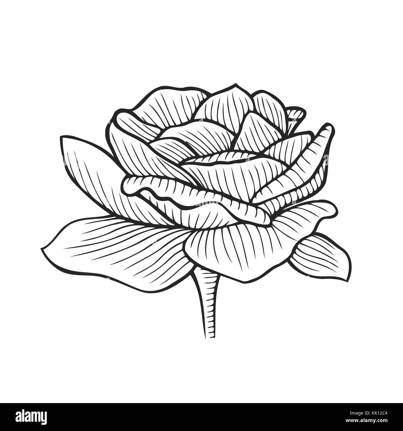 pfingstrose zeichnen blumen zeichnung, hand gezeichnet pfingstrose, blume florale gravur vector, Design ideen