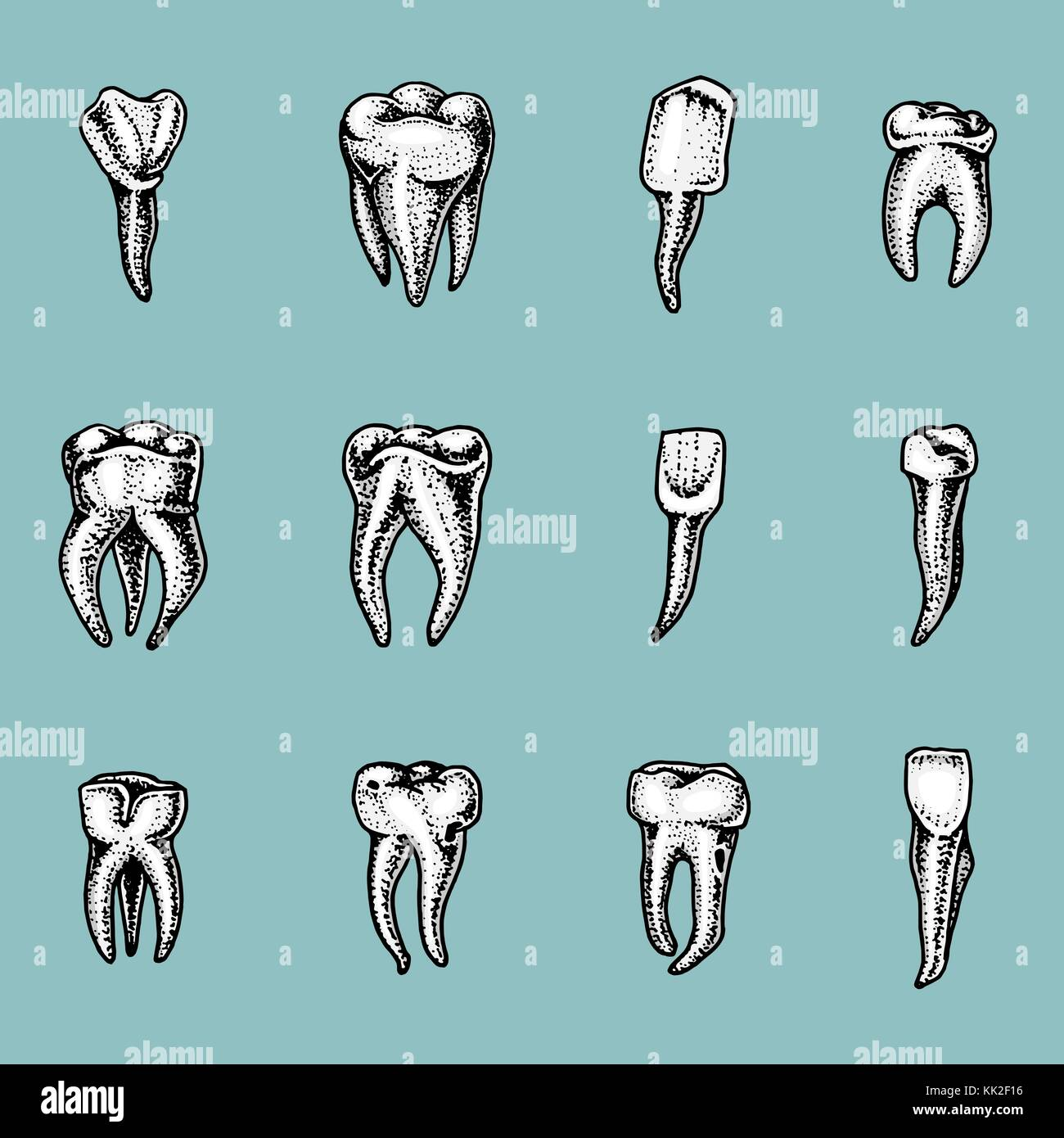 Molar Zähne, Emaille, zahnmedizinische. Arbeit des Zahnarztes und ...