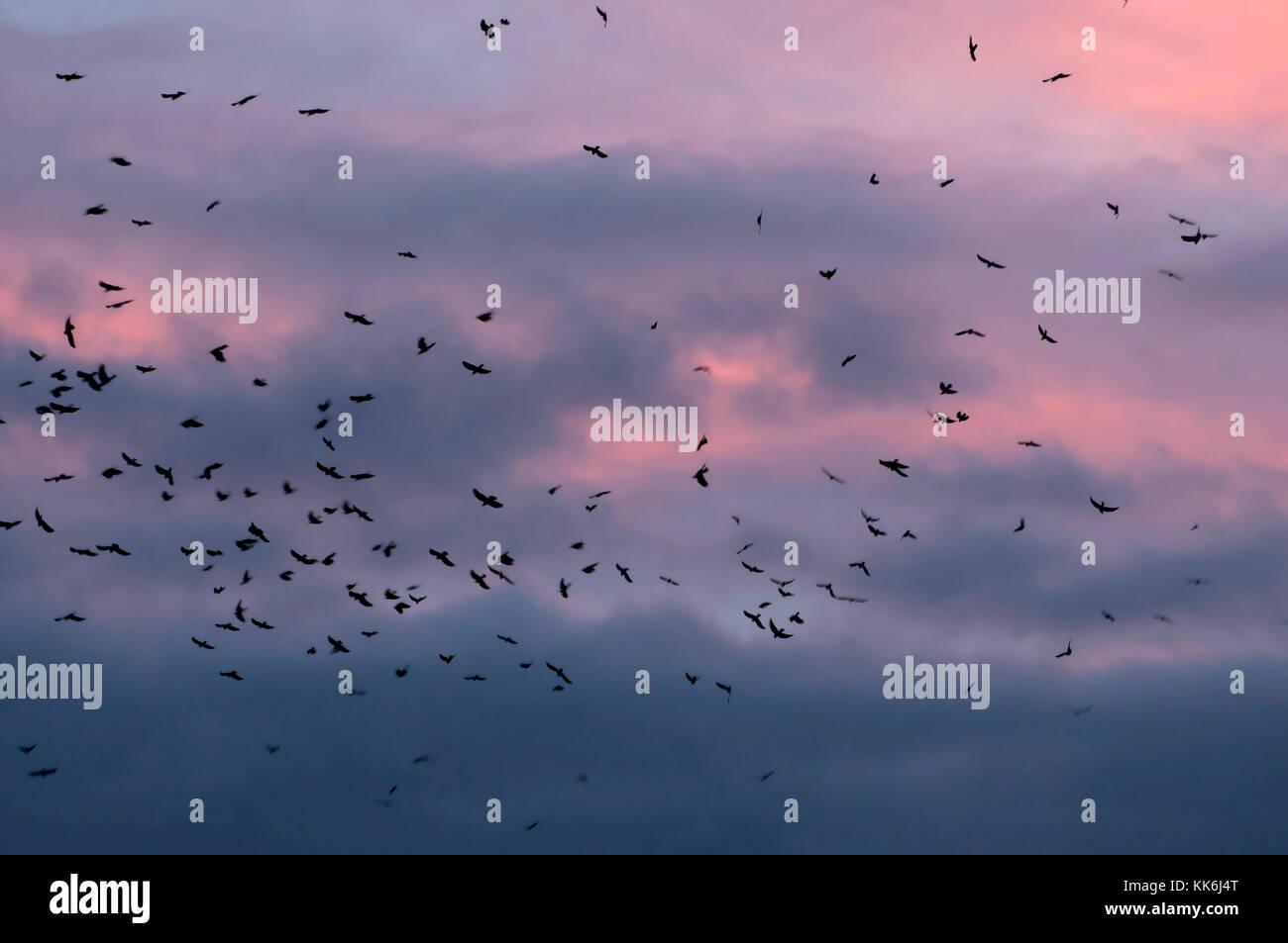 Spatzennest bei Sonnenuntergang Stockbild