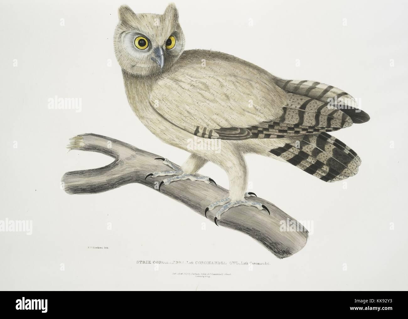 Owl Illustrations Stockfotos & Owl Illustrations Bilder - Alamy