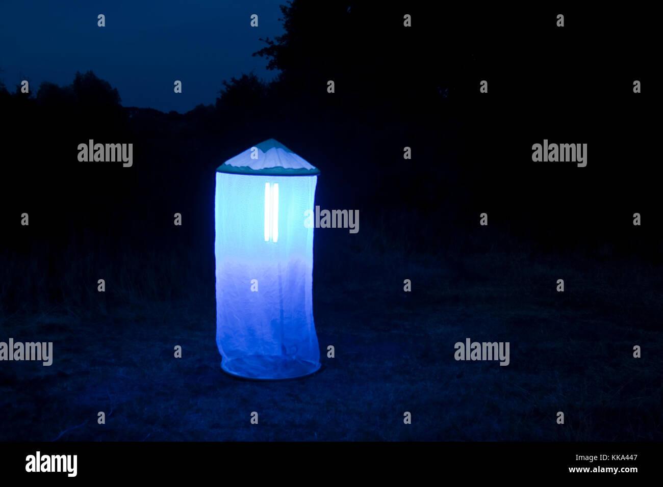 Nachts lockt aufgebautes leuchtzelt Nacht - Schmetterlinge und andere kämpfen ein, Leuchten, Kartierung, henkes Stockbild