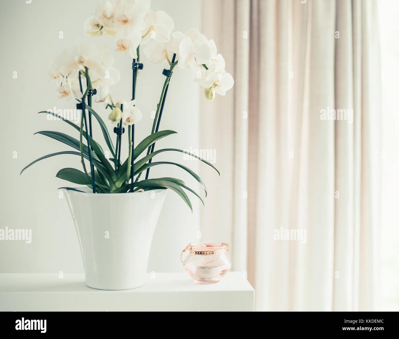 Weiße Orchidee Pflanze mit Blumen im Topf auf Fenster noch ...