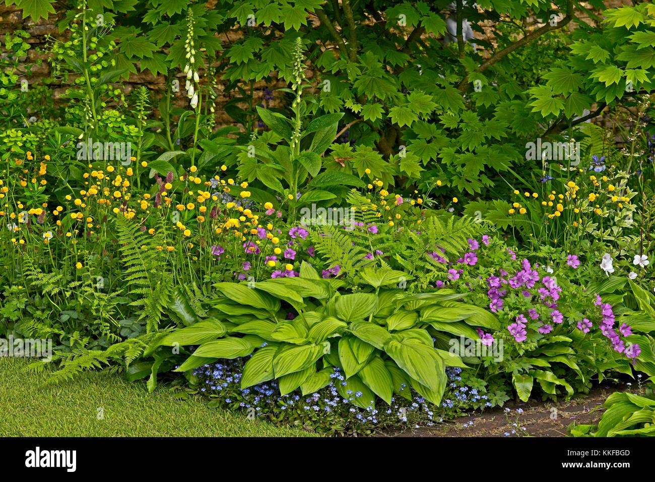 Hostas And Ferns Stockfotos & Hostas And Ferns Bilder - Alamy