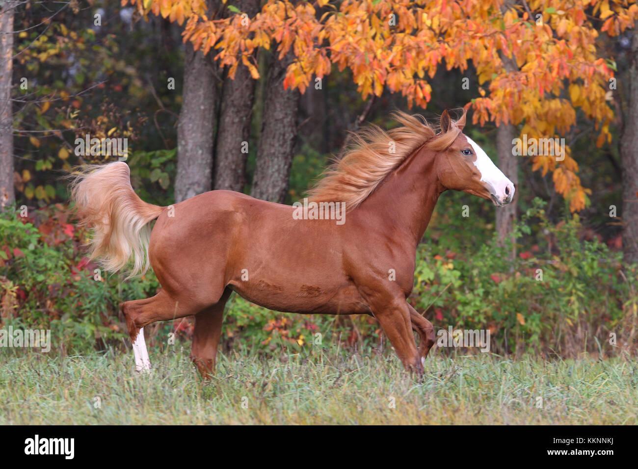 Paint Horse im Feld Stockbild