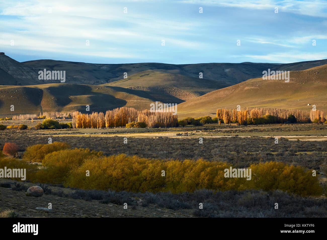 Bäume im Herbst in der Nähe von El Calafate, Patagonien, Argentinien, Südamerika Stockbild