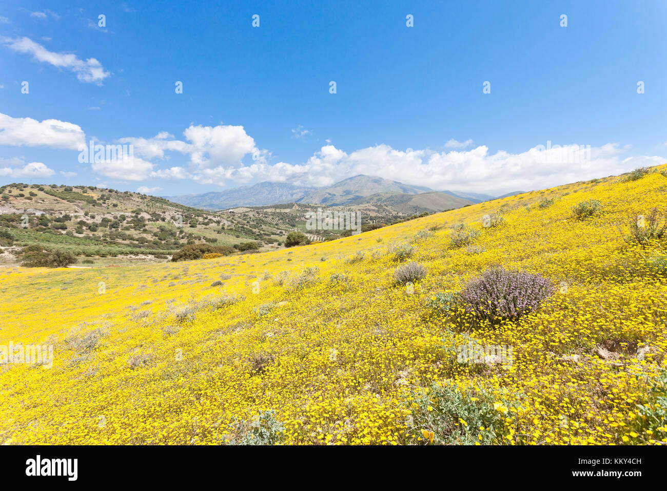 Kreta - Griechenland - Blütenmeer in Agia Galini, Europa Stockfoto