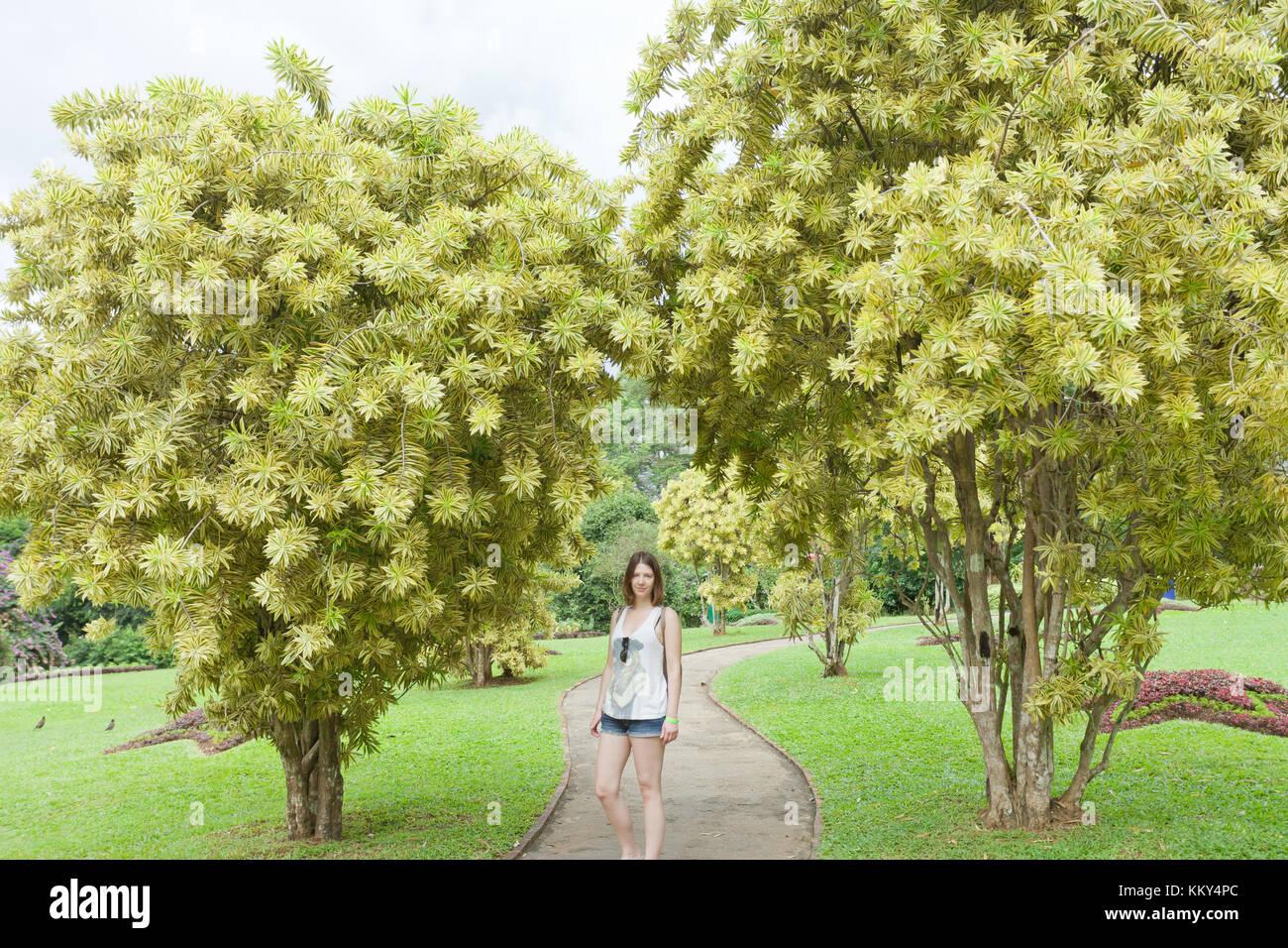 Frau im Park, Peradeniya, Sri Lanka, Asien Stockfoto