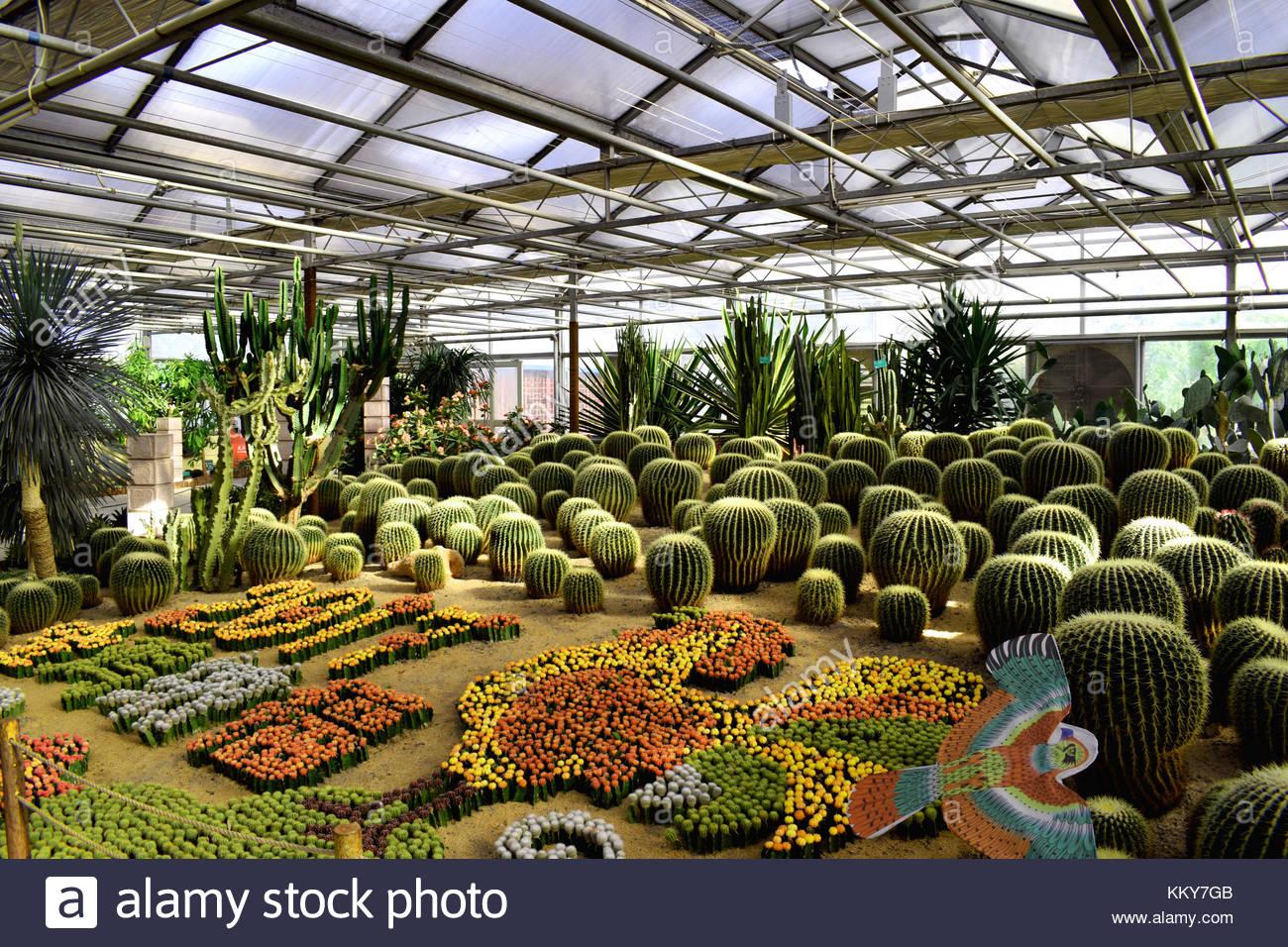 Kakteen Gewachshaus Close Up Stockfoto Bild 167170427 Alamy