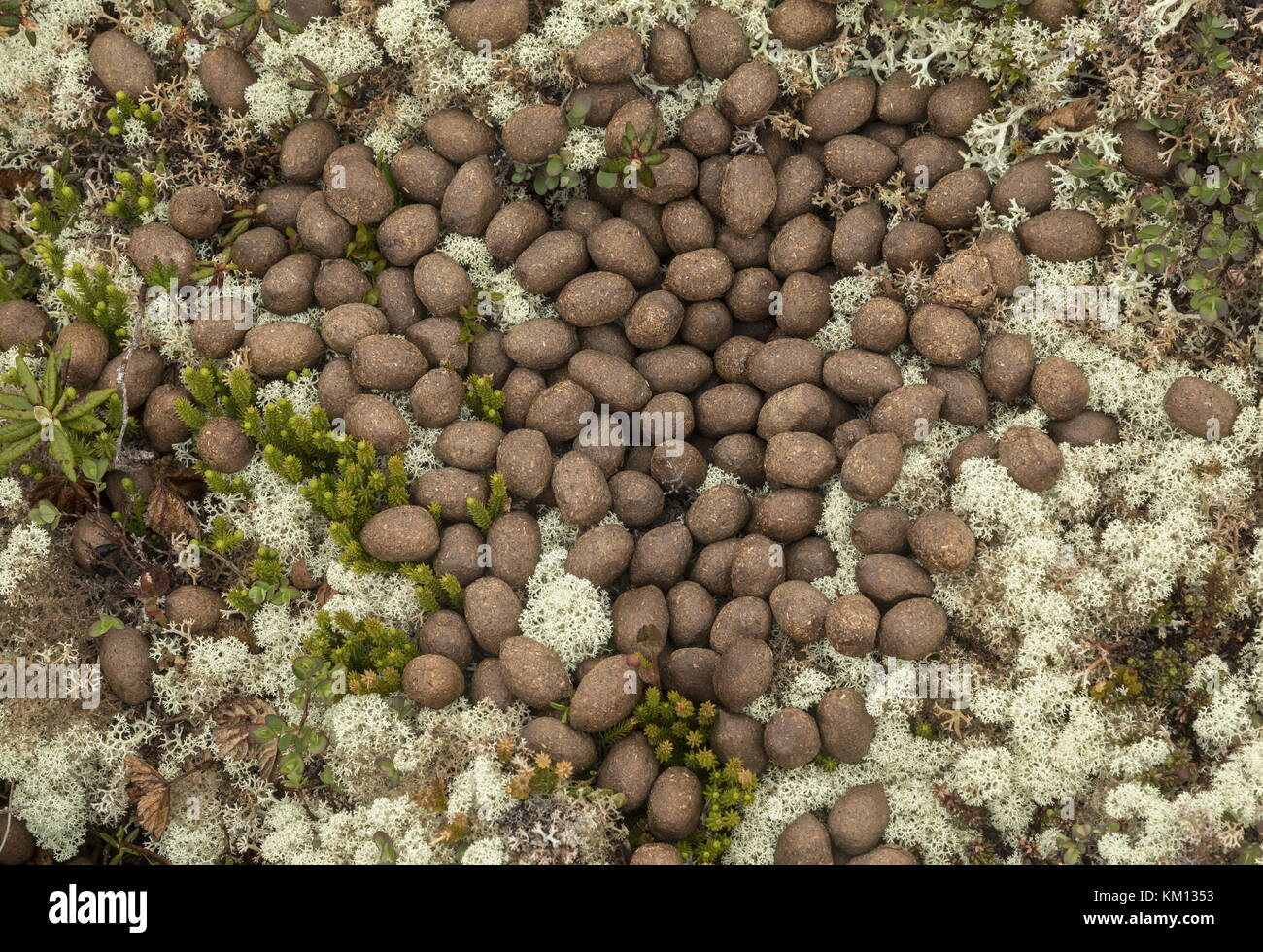droppings stockfotos droppings bilder alamy. Black Bedroom Furniture Sets. Home Design Ideas