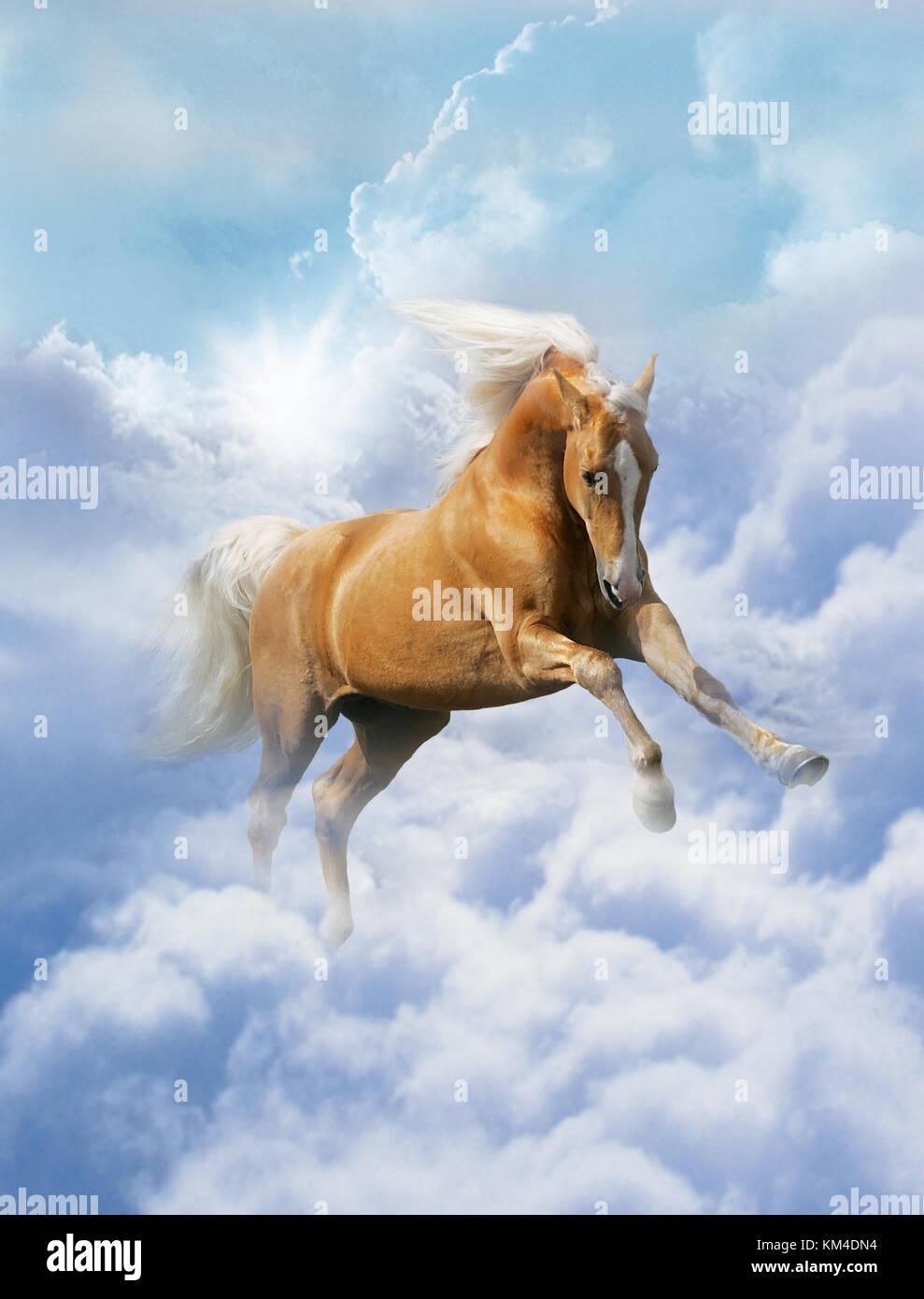Ein palomino Pferd fliegen durch die Wolken Stockbild