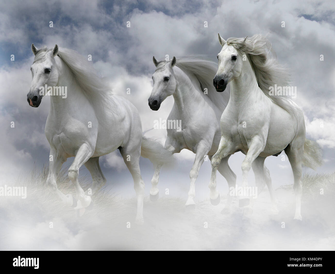 cantering through clouds stockfotos cantering through. Black Bedroom Furniture Sets. Home Design Ideas