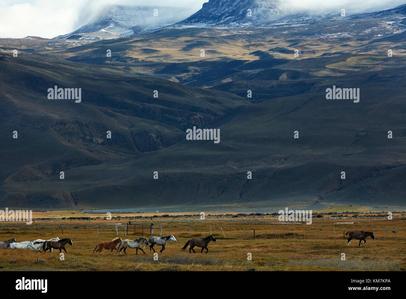Pferde und Ackerland in der Nähe von El Chalten, Patagonien, Argentinien, Südamerika Stockbild