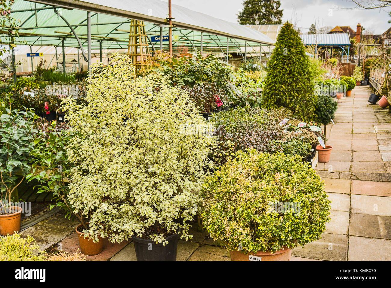 Muster Zierbäume Für Verkauf An Einen Englischen Garten Center