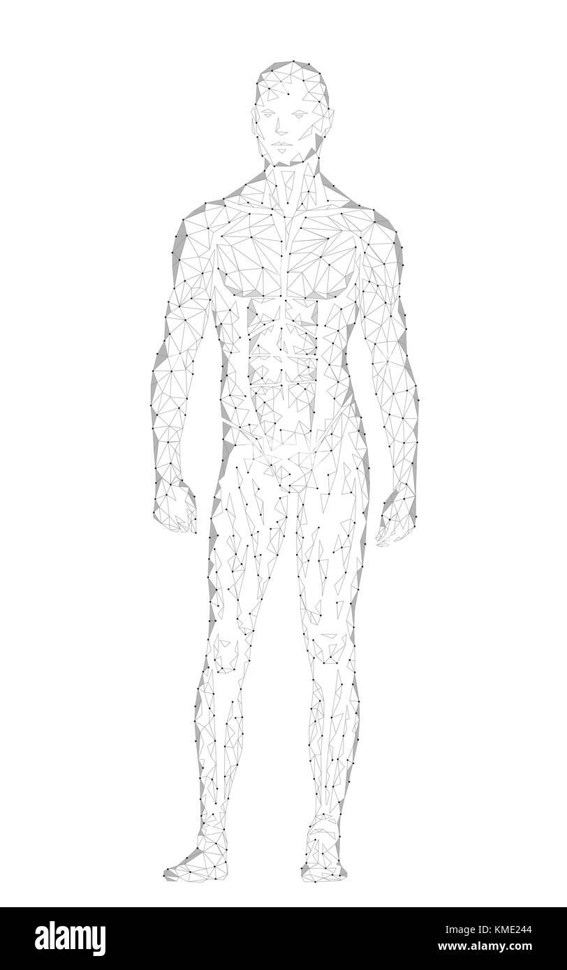 Anatomy Man Standing Illustration Stockfotos & Anatomy Man Standing ...
