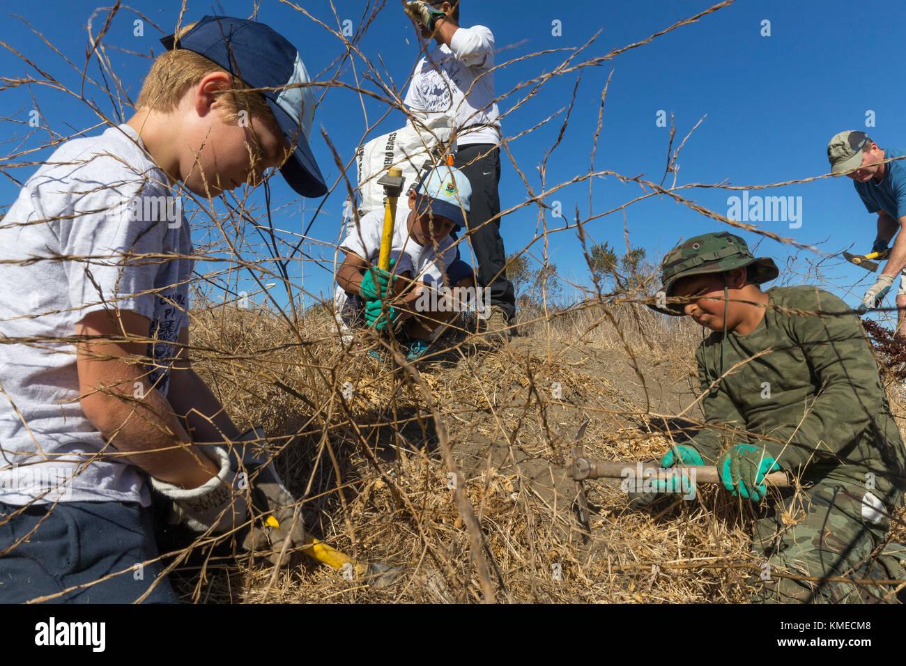 Freiwillige für die Bucht speichern Jäten invasive Arten an byxbee Park, Palo Alto, Ca. Die invasive Arten Stockbild