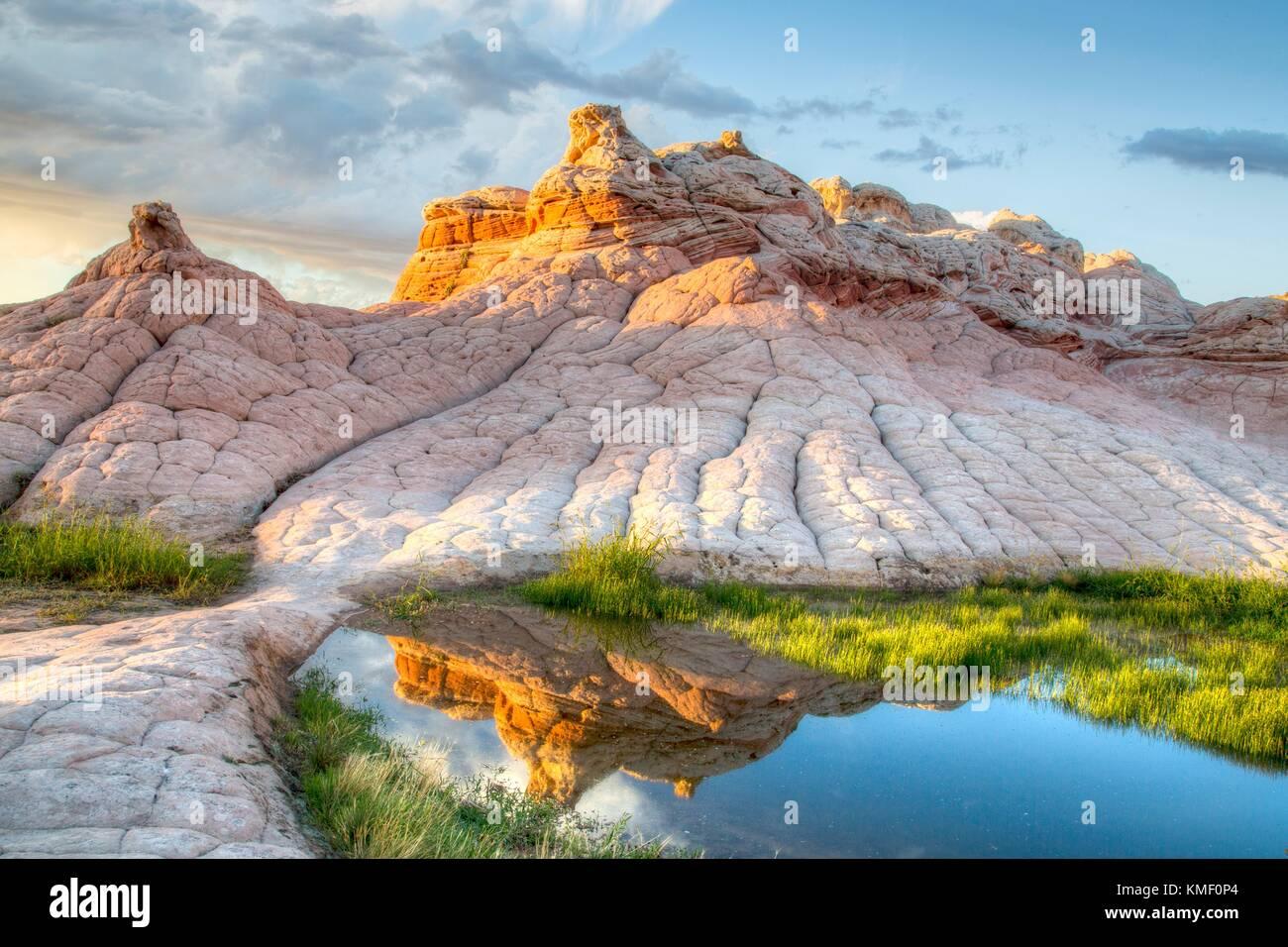Ein Wasser Pool sitzt vor der weißen und Coral Blumenkohl Gehirn Felsformationen, die die White Pocket Monolith Stockfoto