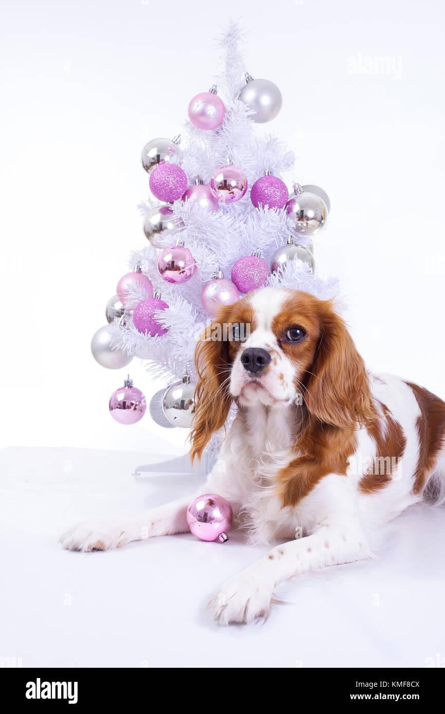 Hund Mit Weihnachtsbaum Weihnachten Tier Haustier Studio Foto Mit