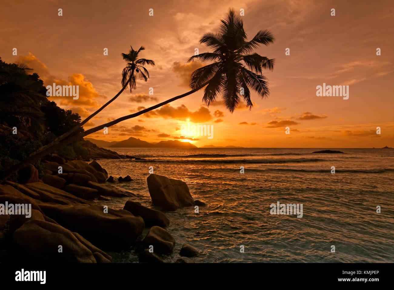 Sonnenuntergang an der Anse Schwere, Palmen, Seychellen, Indischer Ozean, Afrika Stockbild