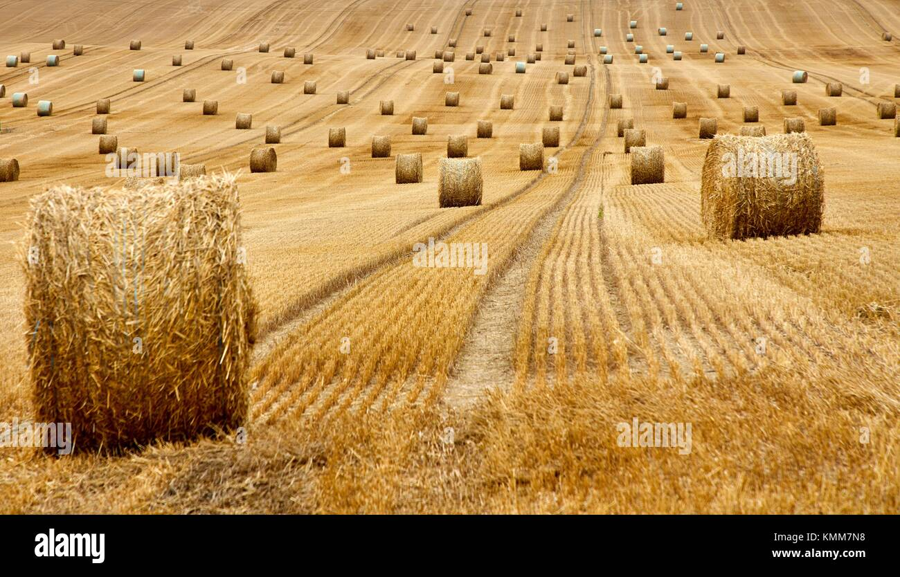 Bereich der Müsli, Ballen Stroh, Stroh, in der Nähe von Auxerre, Yonne, Burgund, Bourgogne, Frankreich, Stockbild
