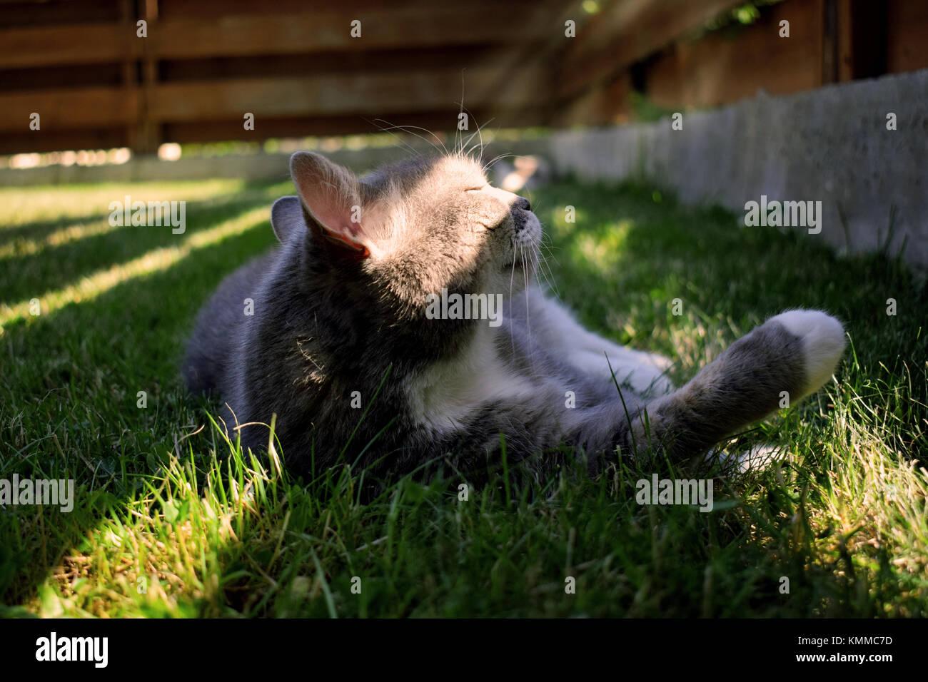grauen und wei en erwachsenen katze drau en bleiben im licht stockfoto bild 167635089 alamy. Black Bedroom Furniture Sets. Home Design Ideas
