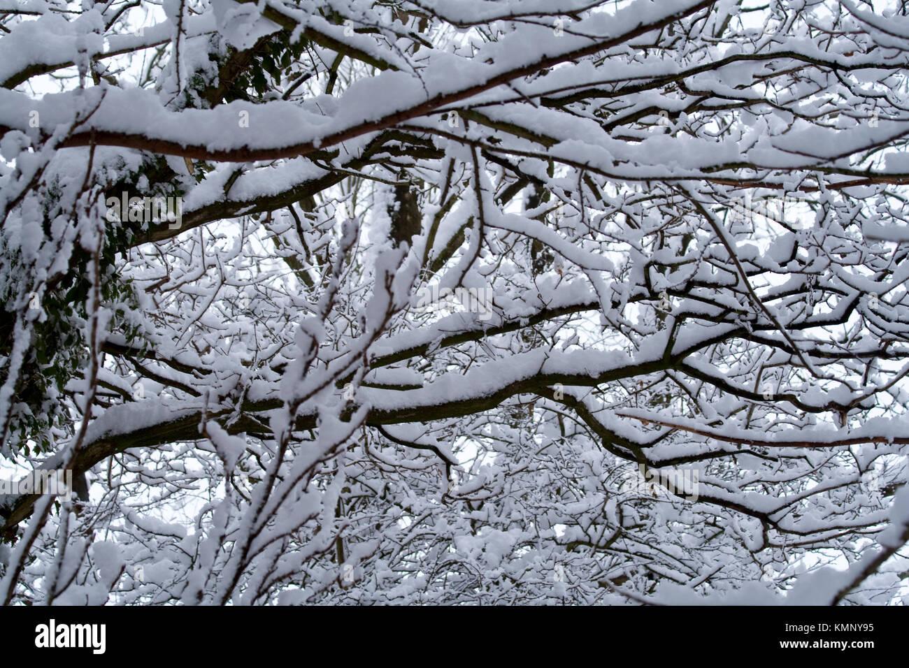 Frischer Schnee beladenen Bäumen schwere schneebedeckten Zweigen, ein abstraktes Bild von hellen und dunklen Stockbild