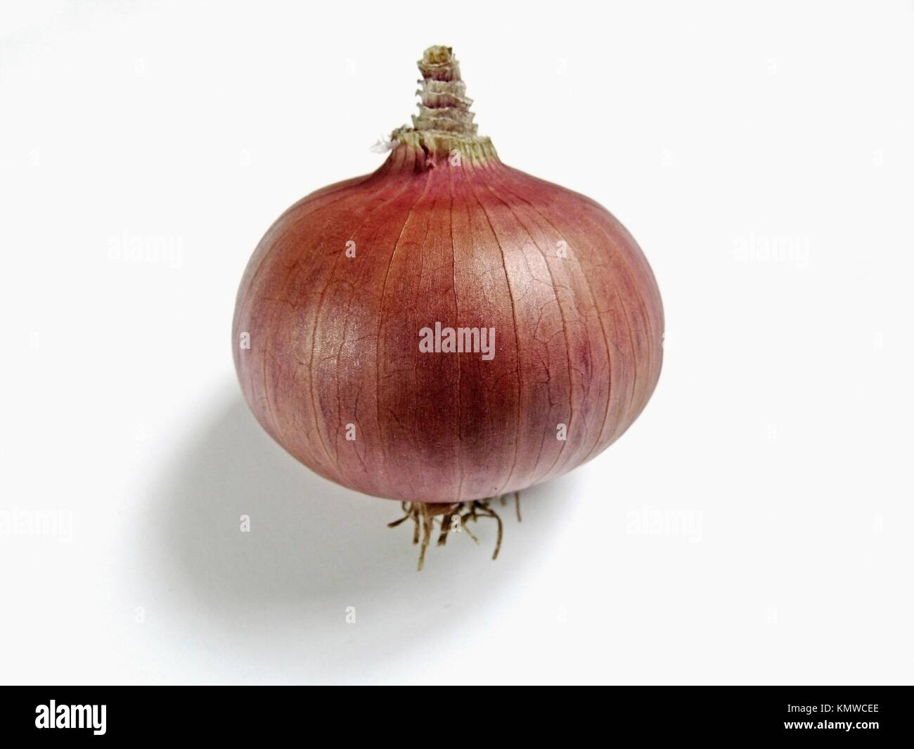 Zwiebel, Allium Cepa, verbreiteten Gemüse Stockbild