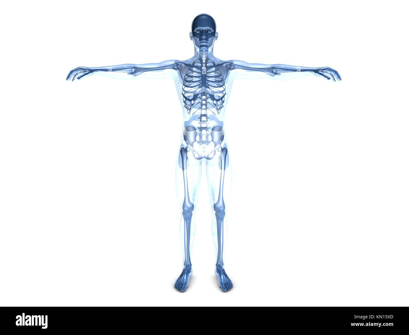 Human Proportion Stockfotos & Human Proportion Bilder - Alamy