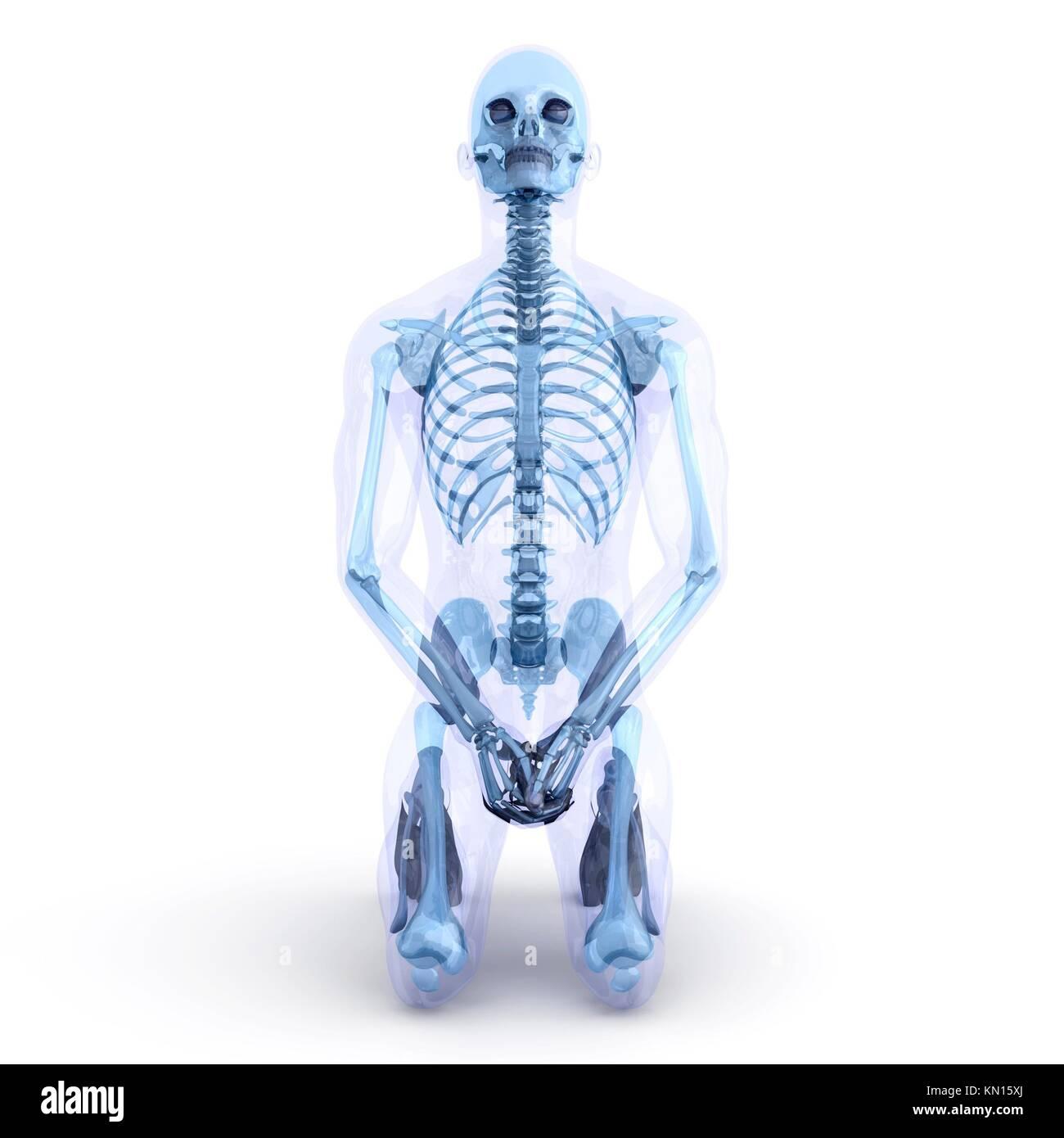 Ein männlicher, menschliche, durchsichtige Körper Anatomie ...