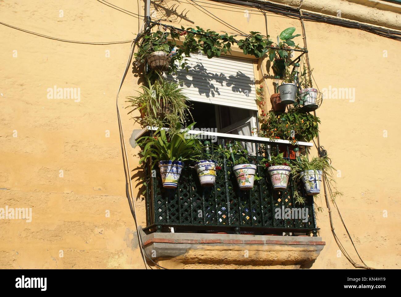 Dekorative Blumentopfe Aus Einem Fenster Balkon Cadiz Spanien
