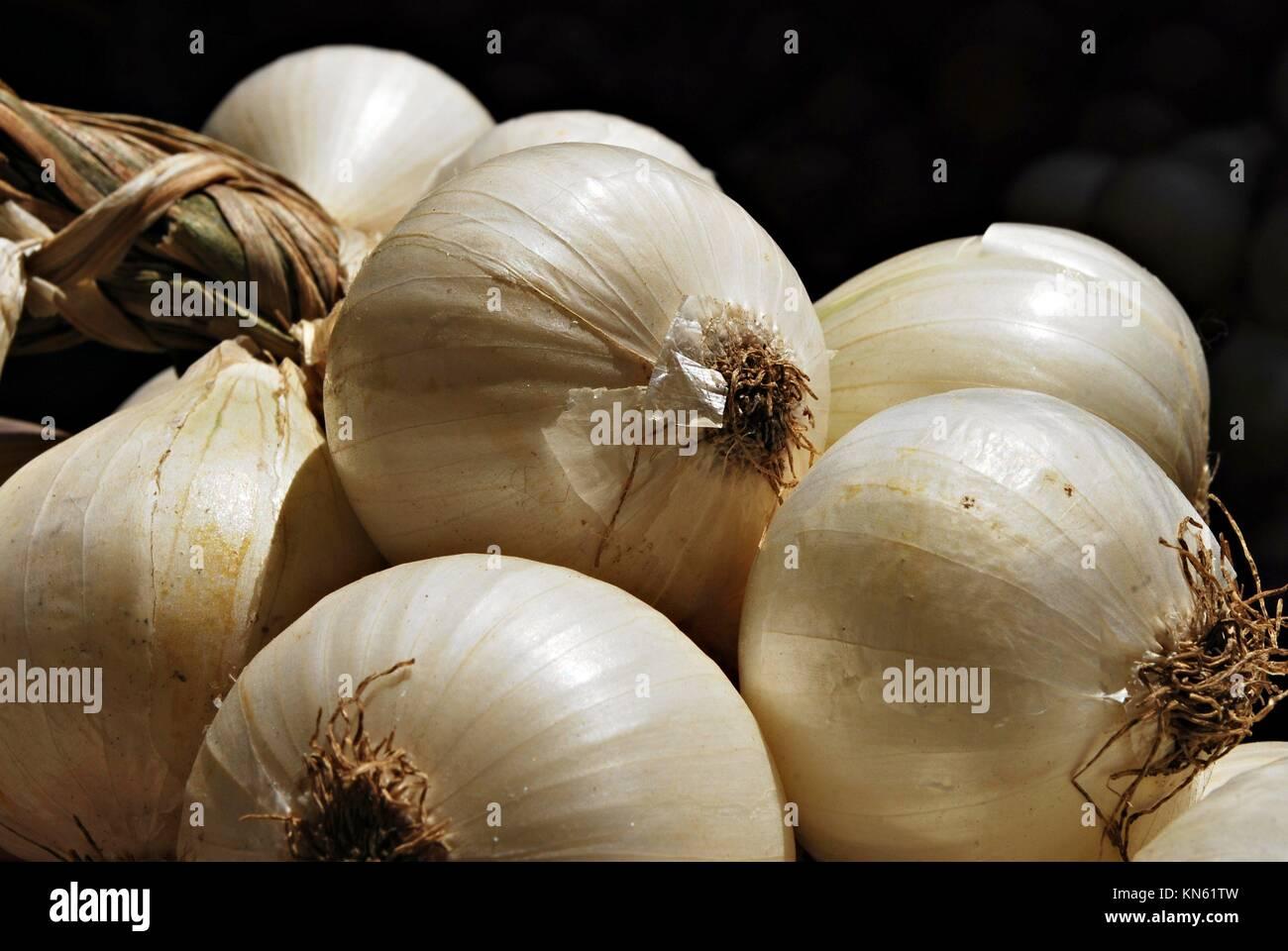 Haufen Zwiebel, Allium cepa, Poona, Mahrshtra, Indien. Stockbild