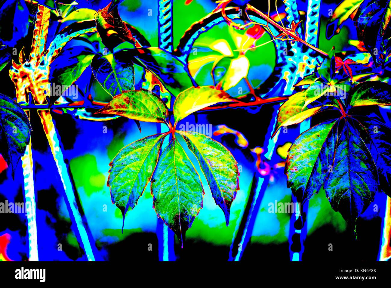 Vines Fence Stockfotos & Vines Fence Bilder - Alamy