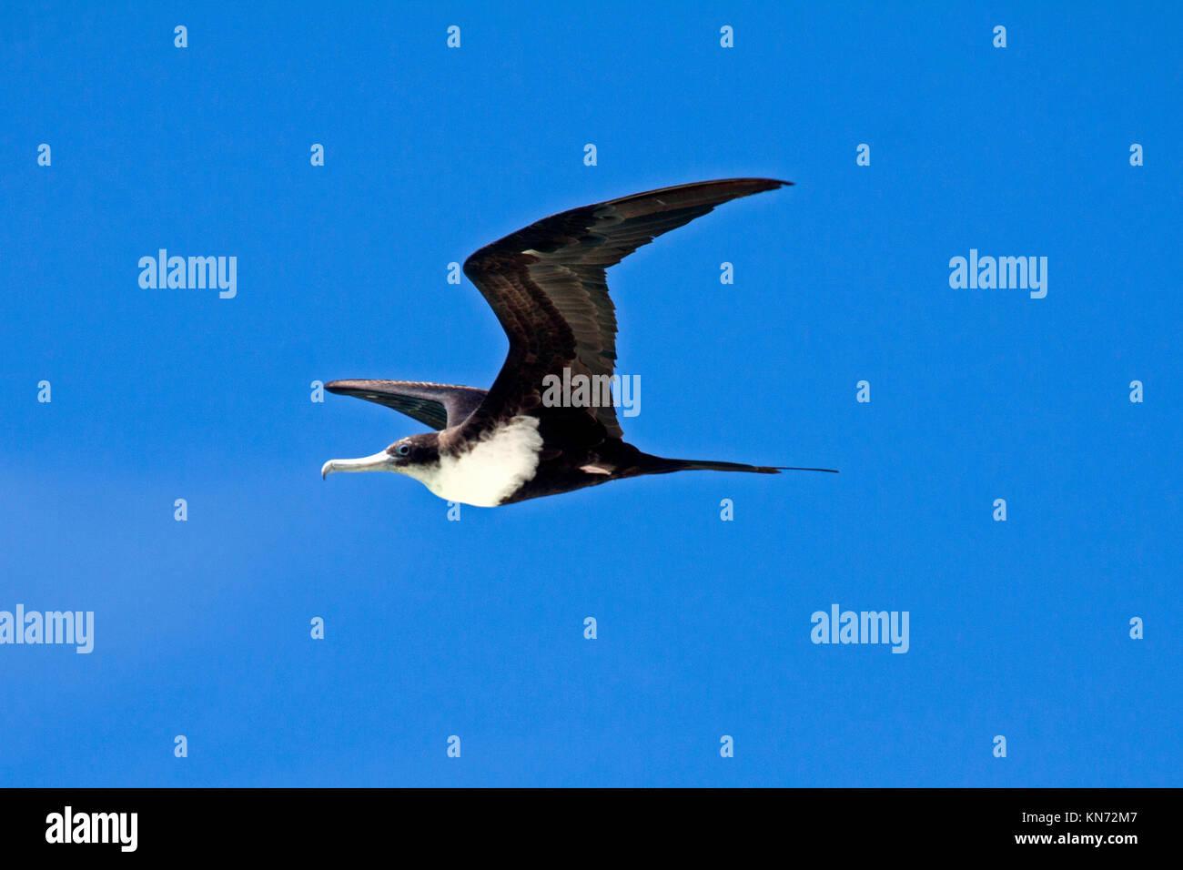 Vogel Perfekt Stockfotos und -bilder Kaufen - Alamy