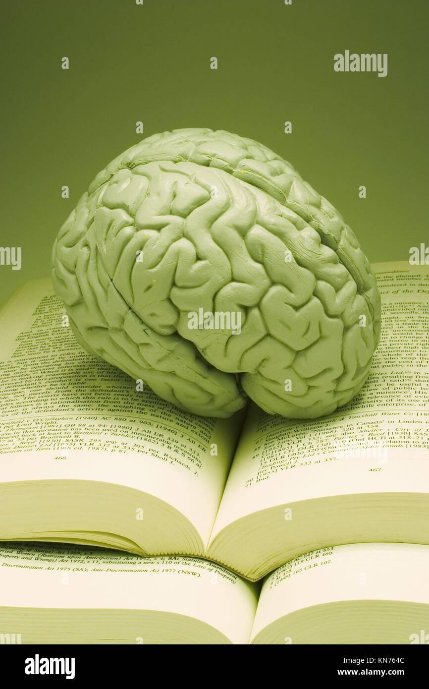 Anatomie Modell des menschlichen Gehirns auf Bücher Stockfoto, Bild ...