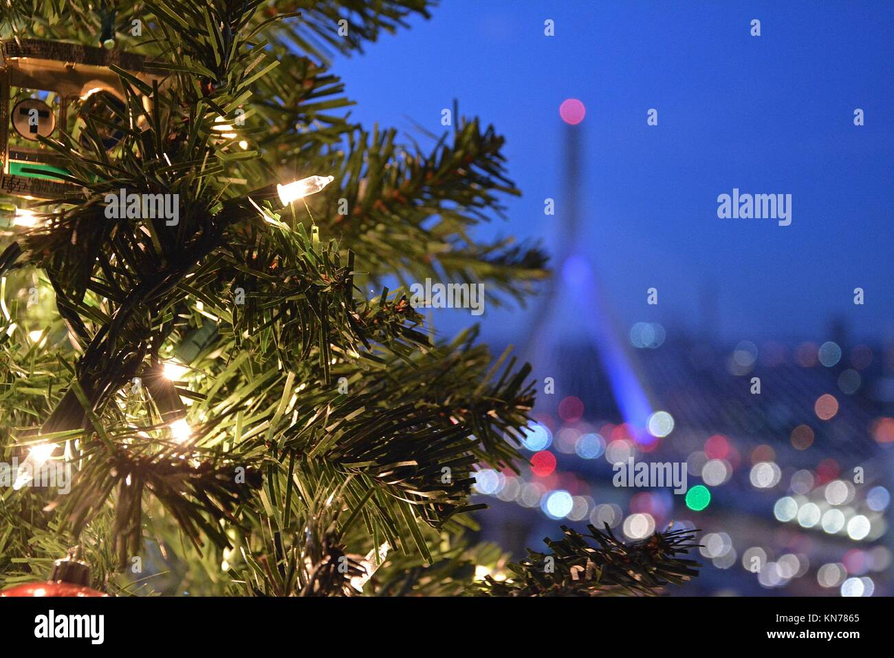 Boston Christmas Tree Stockfotos & Boston Christmas Tree Bilder - Alamy