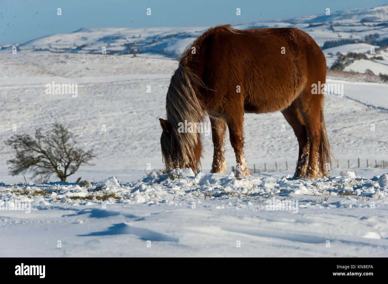 Builth Wells, (mynydd Epynt) Powys, Wales, UK. 11. Dezember 2017. Nach zwei Tagen von schweren Schnee in Powys, Stockbild