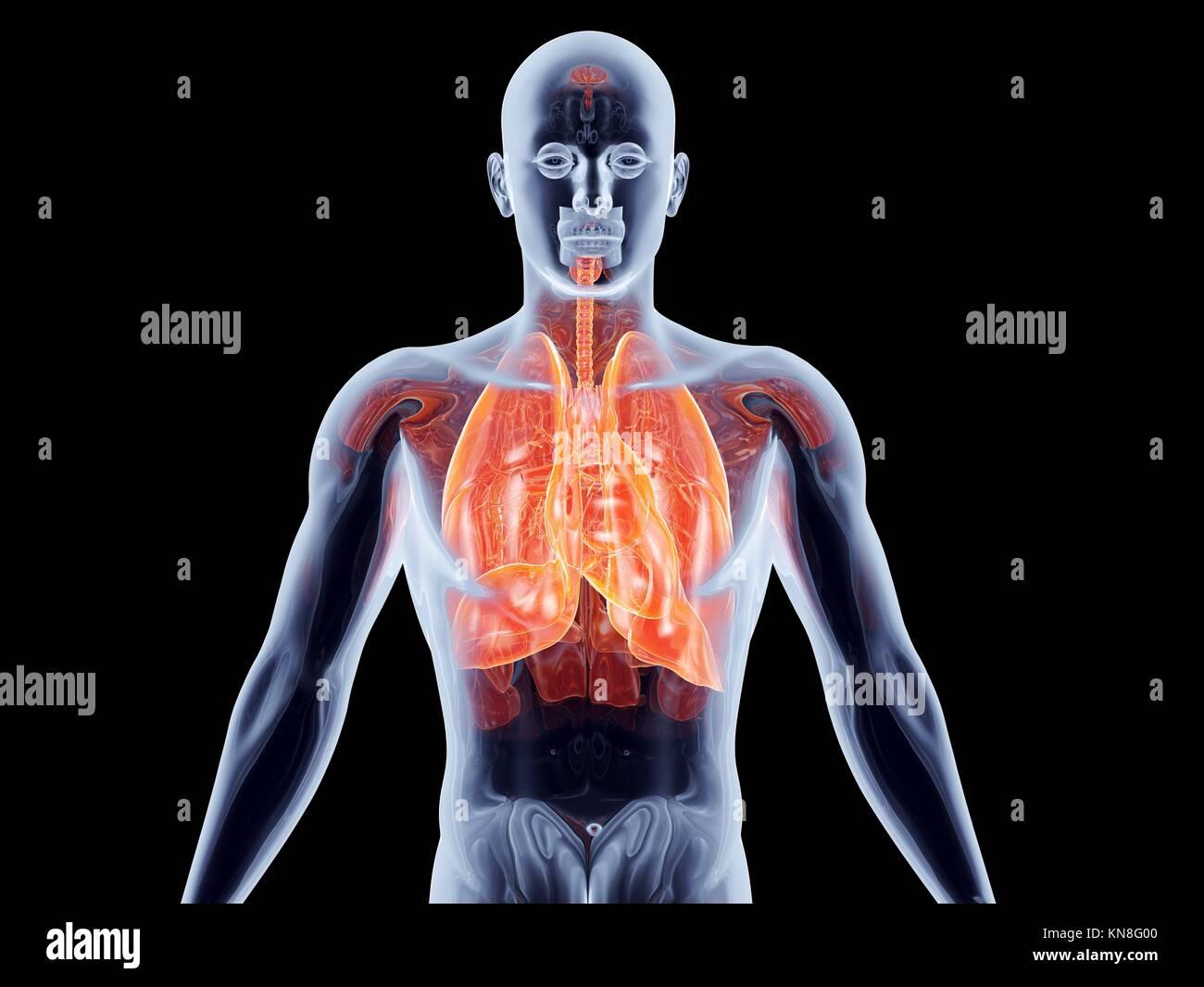 Inhale Medicine Stockfotos & Inhale Medicine Bilder - Alamy