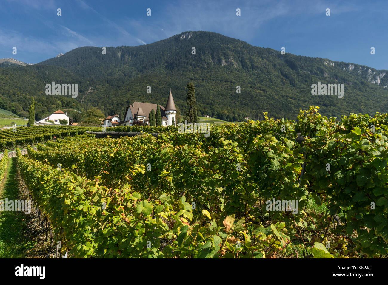Château Maison Blanche, Weinberge, Yvorne, Region Lavaux, Genfer See, Schweizer Alpen, Schweiz Stockbild