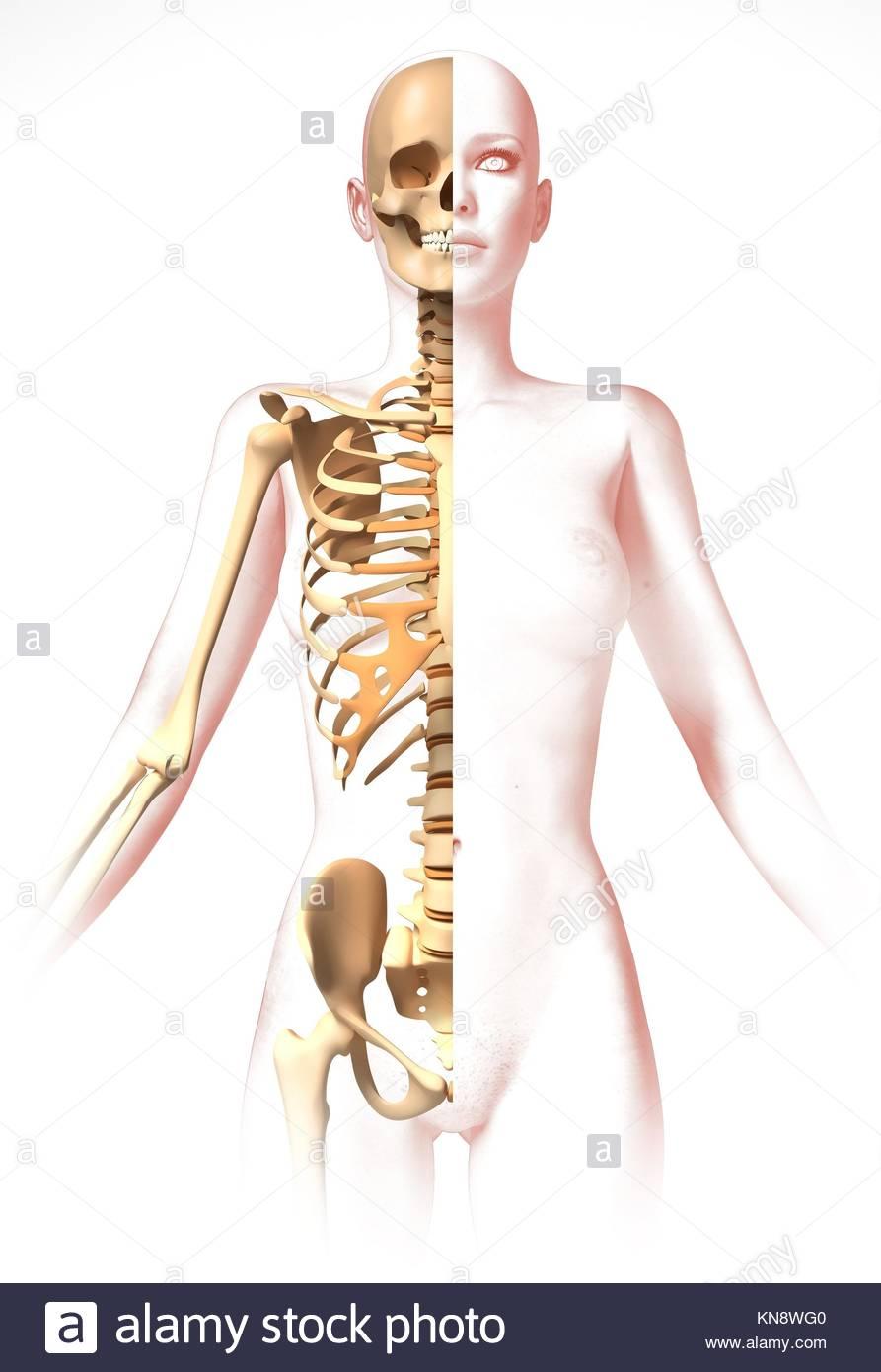 Niedlich Hüftknochen Anatomie Video Fotos - Menschliche Anatomie ...